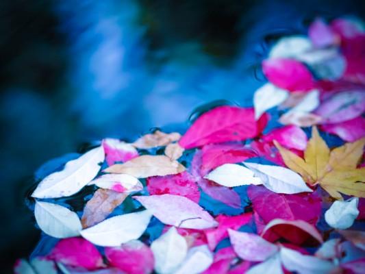 目白庭園の落ち葉