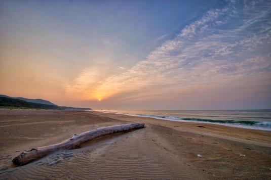 砂浜と流木